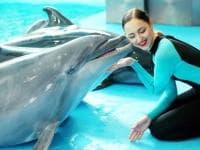 Dolphins Show