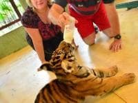 Tiger Kingdom Phuket Tour
