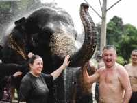 Phuket Elephant Jungle Sanctuary - Half Day Visit Program